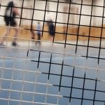 Training for Badminton Players: Quality Vs. Quantity